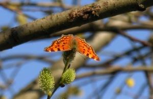 Vlinders en andere zaken