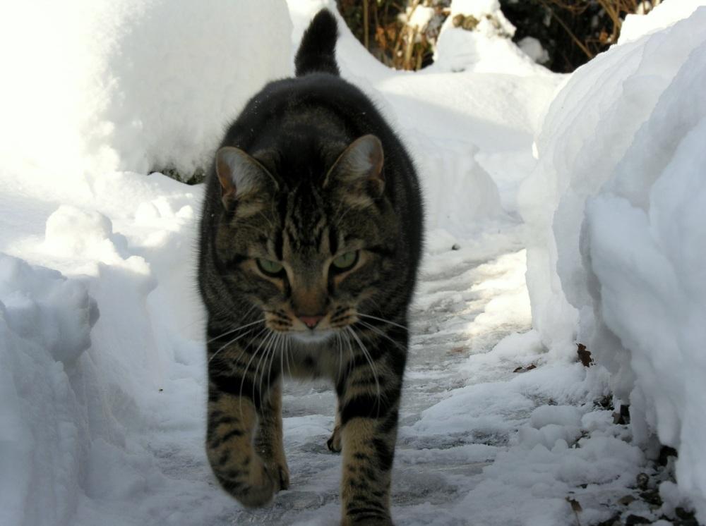 Zittend op zijn kont kan hij nog net over de sneeuw heen loeren.: https://sandrabrennand.wordpress.com/category/katten-2