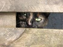 Mijn katten