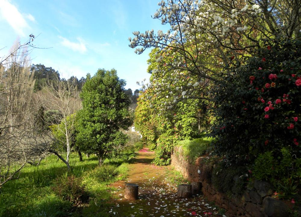 Madeira.19jan. 023