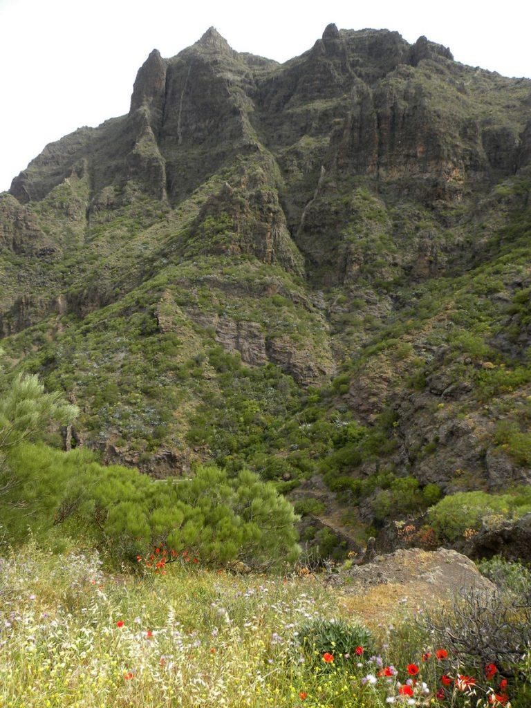 Tenerife 21april2013 021