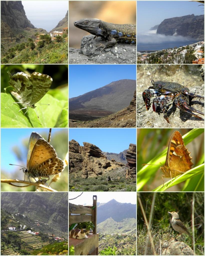 Tenerife 21april2013