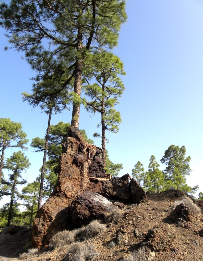 Tenerife 22april2013 009