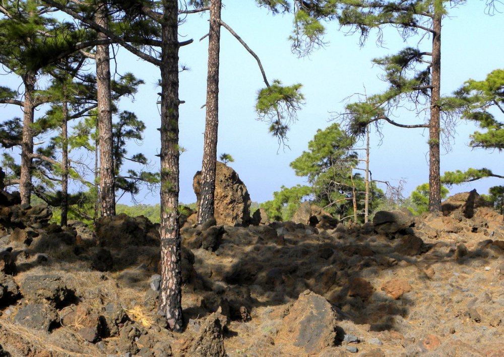Tenerife 22april2013 011