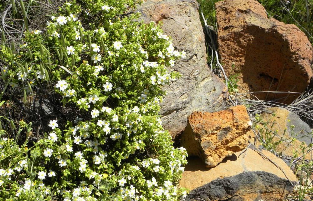 Tenerife 23april2013 031
