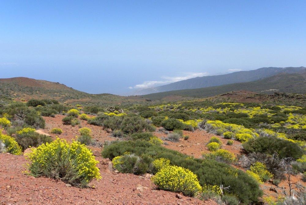 Tenerife 25april2013 090