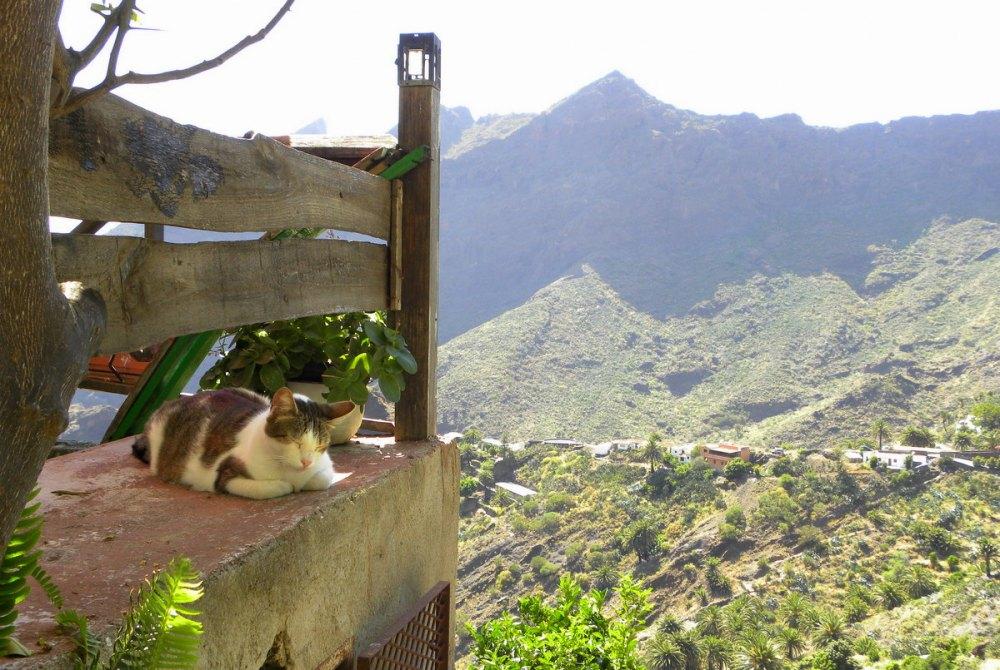 Tenerife 26april2013 040
