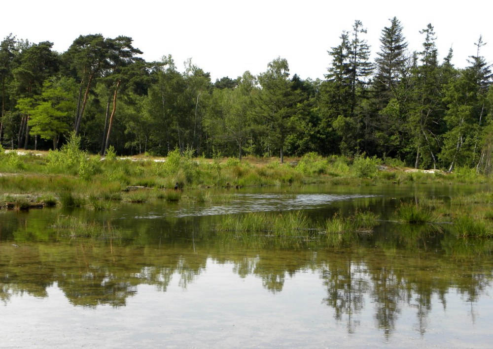 Juli.2013 Brunssumerheide 125