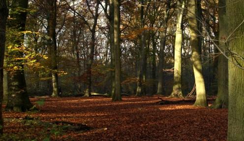 open plek in bos