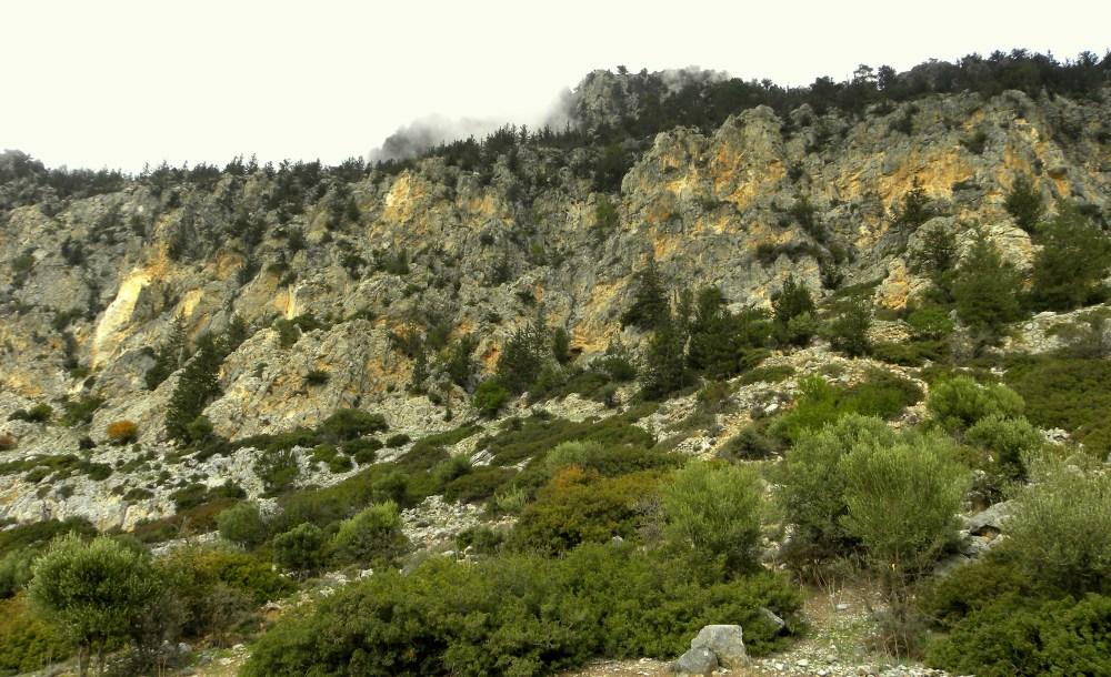 bergtop