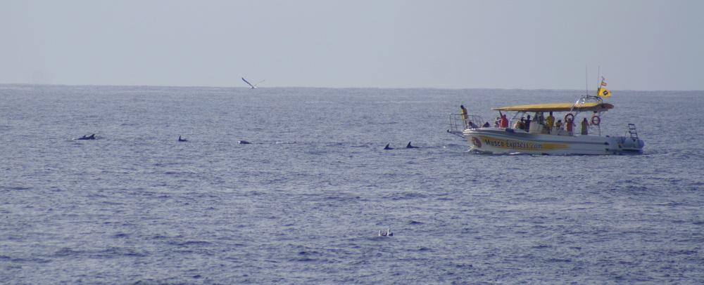 dolfijnen in de verte