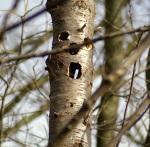 boom bleek teslank