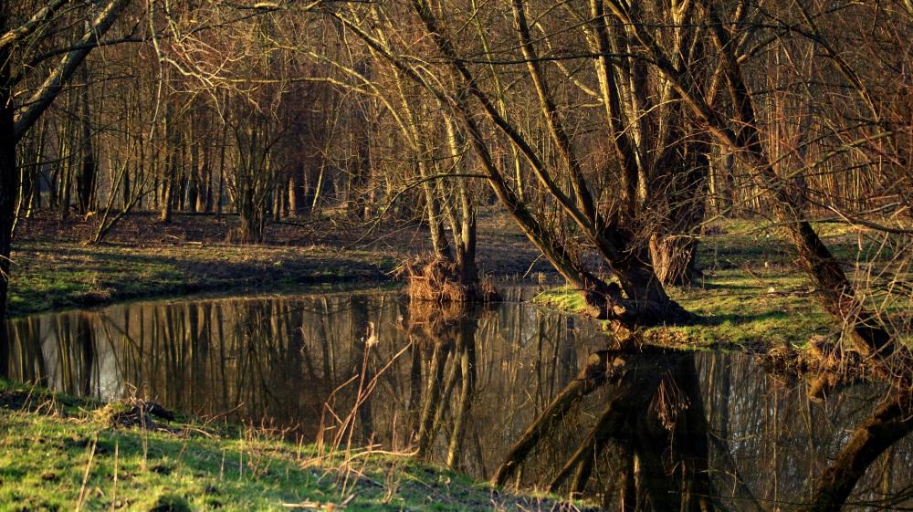 spiegeling in het bos