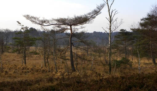 vreemde boom in moeras