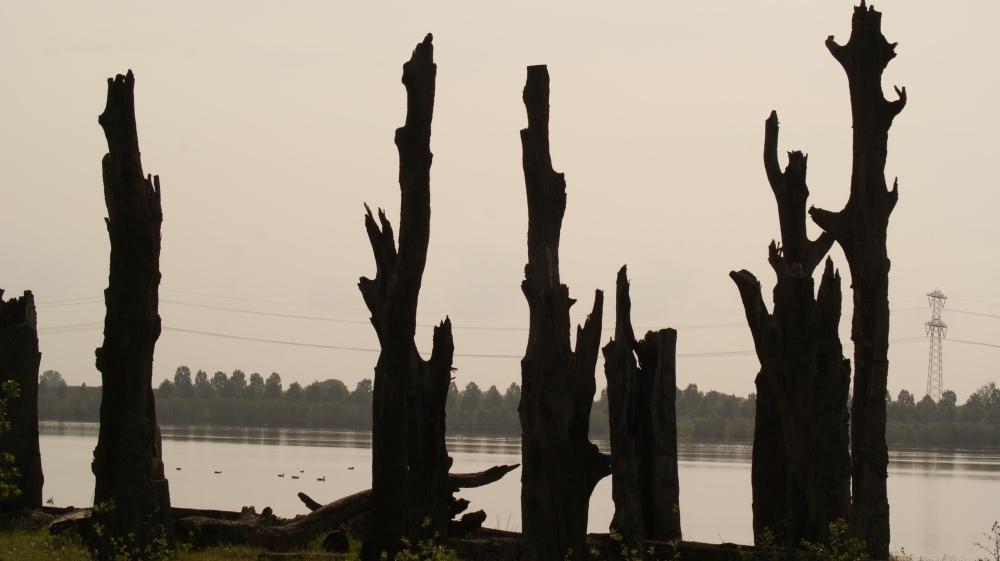 2000 jaar oude bomen