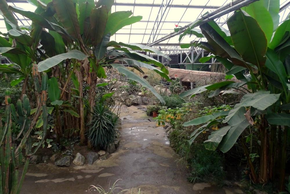 Tropenhal, Olmense zoo